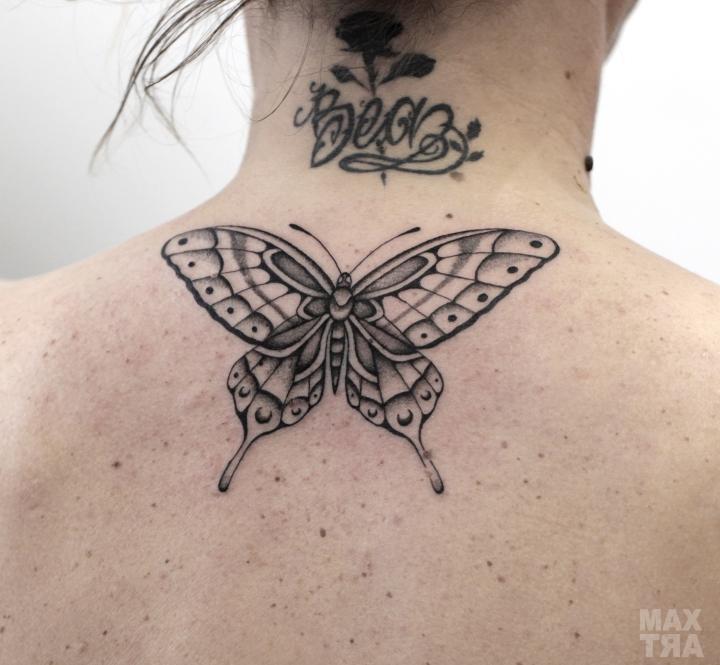 farfalla BN